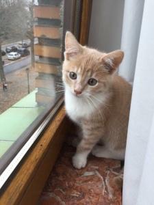 Romeo nuestro gato