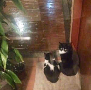 Aisha y Dali viendo llovet