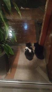 Aisha y Dali viendo llover