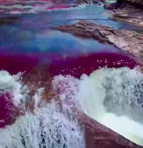 Caño Cristales: El Río de los 7 colores