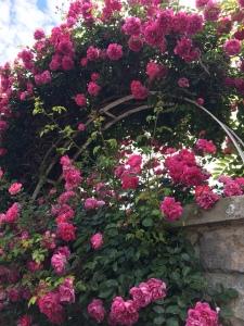 Las mas bellas rosas en Veules-les-Roses